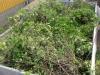 6m2 trädgårdsavfall